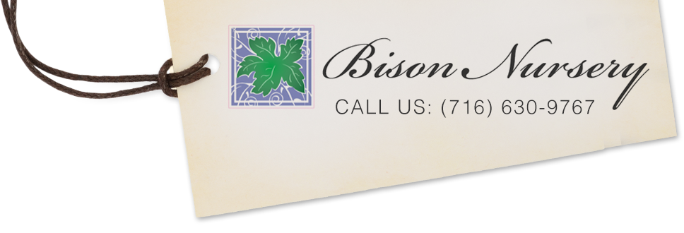Bison Nursery logo